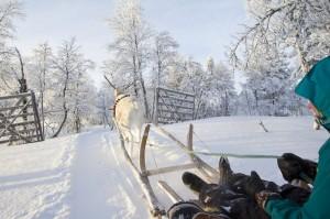 mikko_nikkinen-sleigh_riding%2C_rajd_-2160
