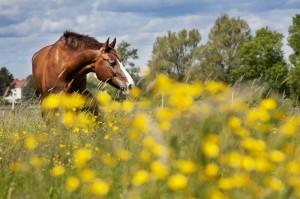 melker_dahlstrand-horse-1676