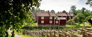 1 Culture and tradition in sweden 920_368_tony+töreklint-red+cottages-694