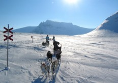 Dogsledding Aresleddog_Are_sleddogadventures_HR_100_70