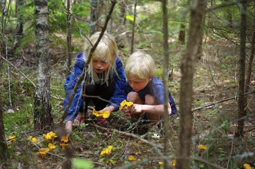 Mushrooms Johan Willner imagebank.sweden.se