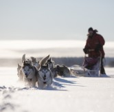 fredrik_broman-dog_sledding-3789
