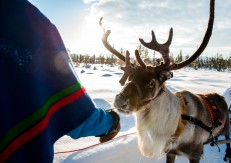 lola_akinmade_akerstrom-sami_with_reindeer-2607