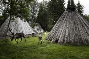 tina_stafrén-sami_camp-2113